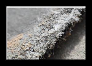 Asbestarbeiten Alzey
